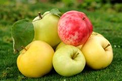 Manzanas en hierba verde Fotos de archivo libres de regalías