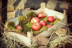 Manzanas en la caja de madera Fotos de archivo