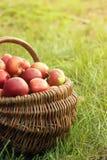 Manzanas en la cesta Foto de archivo