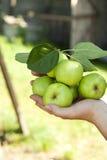 Manzanas en la mano Fotos de archivo