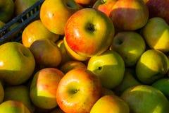 Manzanas en la puesta del sol Imágenes de archivo libres de regalías