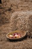 Manzanas en tazón de fuente imagen de archivo libre de regalías