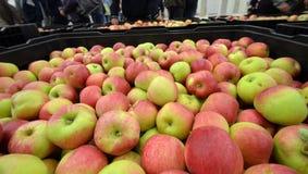 Manzanas en un compartimiento del almacenamiento Fotografía de archivo libre de regalías