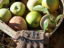 Manzanas en una cesta Fotografía de archivo libre de regalías