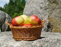 Manzanas en una cesta Imagen de archivo