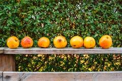 Manzanas en una fila Foto de archivo libre de regalías