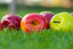 Manzanas en una hierba verde Foto de archivo libre de regalías