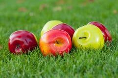 Manzanas en una hierba verde Imagen de archivo libre de regalías