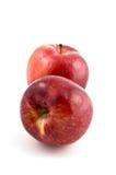 Manzanas espartanos Imagenes de archivo