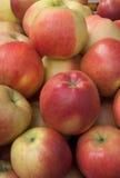 Manzanas frescas Fotos de archivo libres de regalías