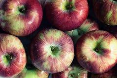 Manzanas frescas Foto de archivo