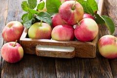 Manzanas frescas con las hojas en una caja de madera Fotos de archivo