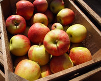 Manzanas frescas de la granja Imagen de archivo libre de regalías