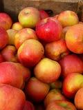 Manzanas frescas del otoño Fotos de archivo libres de regalías