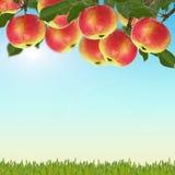 Manzanas frescas en fondo azul Fotos de archivo