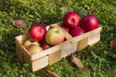 Manzanas frescas en una cesta de madera Imágenes de archivo libres de regalías