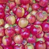 Manzanas frescas para la venta Fotos de archivo