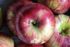 Manzanas frescas una Foto de archivo