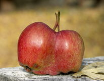 Manzanas gemelas Imagen de archivo libre de regalías