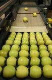 Manzanas 'golden delicious' en una bandeja Imágenes de archivo libres de regalías