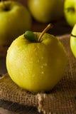 Manzanas 'golden delicious' orgánicas crudas Fotos de archivo