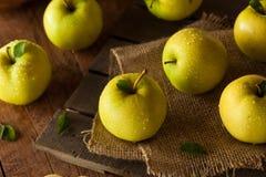 Manzanas 'golden delicious' orgánicas crudas Fotografía de archivo