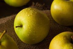 Manzanas 'golden delicious' orgánicas crudas Fotografía de archivo libre de regalías