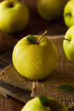 Manzanas 'golden delicious' orgánicas crudas Imagen de archivo libre de regalías