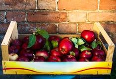 Manzanas grandes rojas con las hojas verdes en el fondo rústico del vintage, c Imágenes de archivo libres de regalías