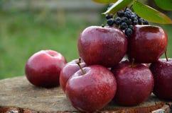 Manzanas hermosas 1 Imagen de archivo libre de regalías