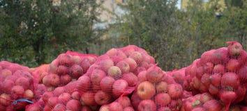 Manzanas industriales Fotos de archivo libres de regalías
