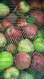 Manzanas industriales Fotografía de archivo libre de regalías