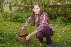 Manzanas jovenes de la cosecha del adolescente en el jardín Foto de archivo libre de regalías