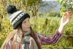Manzanas jovenes de la cosecha del adolescente en el jardín Foto de archivo