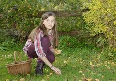 Manzanas jovenes de la cosecha del adolescente en el jardín Imagenes de archivo
