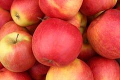 Manzanas jugosas, fragantes que se utilizarán para la empanada foto de archivo libre de regalías
