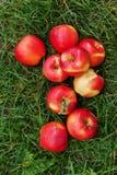 manzanas jugosas rojas en hierba verde Foto de archivo