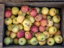 Manzanas locales del tiro de arriba listas para el mercado del ` s del granjero Fotografía de archivo