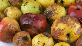 Manzanas maduradas estropeadas putrefactas multicoloras que giran en el fondo blanco almacen de metraje de vídeo