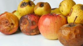 Manzanas maduradas estropeadas putrefactas multicoloras y una manzana madura en el fondo blanco almacen de video
