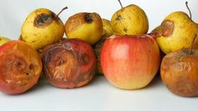 Manzanas maduradas estropeadas putrefactas multicoloras y una manzana madura en el fondo blanco almacen de metraje de vídeo