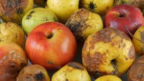 Manzanas maduradas estropeadas putrefactas multicoloras y una manzana madura que giran en el fondo blanco almacen de metraje de vídeo