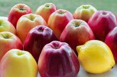 Manzanas maduras Imagenes de archivo