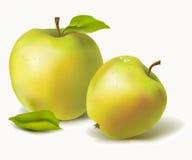 Manzanas maduras con las hojas Imágenes de archivo libres de regalías