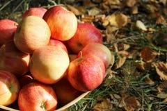 Manzanas maduras en un cuenco en la tierra Foto de archivo