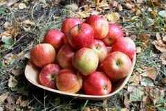 Manzanas maduras en un cuenco en la tierra Fotos de archivo