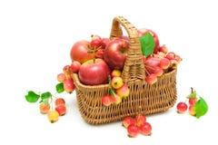 Manzanas maduras en una cesta en un fondo blanco Imagen de archivo libre de regalías