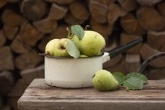 Manzanas maduras frescas en el plato Manzanas de la cosecha en huerta del verano Fruta y verdura orgánica Fotos de archivo libres de regalías
