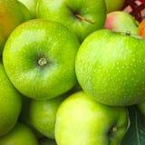 Manzanas maduras frescas en una cesta, colección en un jardín del verano Fotografía de archivo libre de regalías