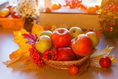 Manzanas maduras rojas con las hojas de otoño y el serbal Foto de archivo